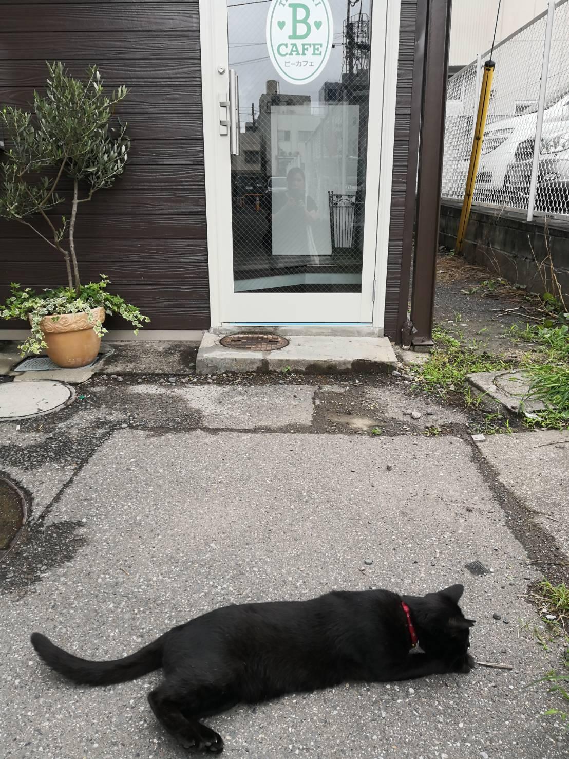 黒猫が遊びに来る「猫カフェ」のような占い館!本当に可愛い人懐っこい猫ちゃんです
